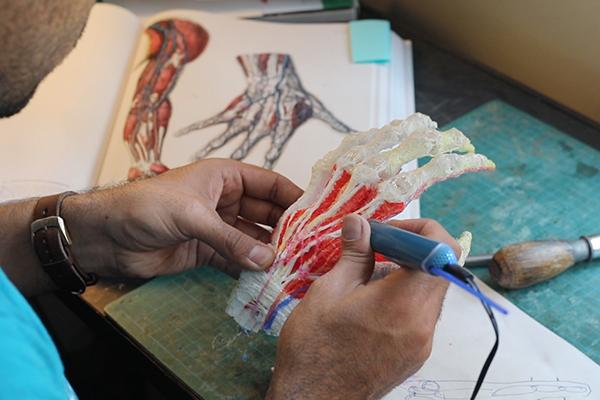 Bringing the Anatomy Textbook to Life with Ricardo Martinez